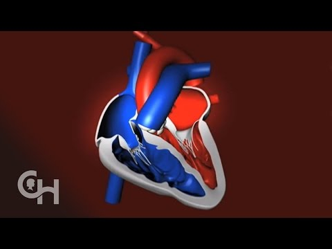 How a Normal Heart Pumps Blood -- The Children's Hospital of Philadelphia