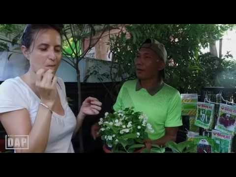 Bali Fruit Garden - EXPO Pertanian Universitas Udayana Bali