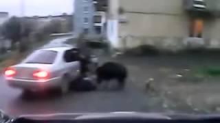 Кабан напал на женщину,  ЖЕСТЬ смотреть до конца