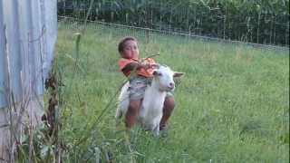 little kid riding goat
