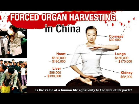 Image result for china organ harvesting