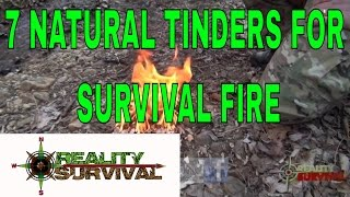 7 Natural Tinders For Wilderness Survival Fire Building Or Camping