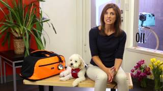 Pet Travel Safety Begins with Training