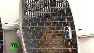 Спасенные весной тюлени выпущены в Финский залив.