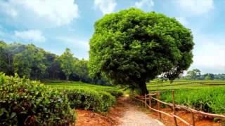 видео Красивые фотографии осенней природы