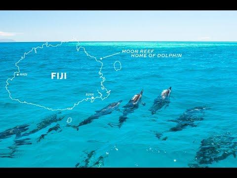 Seaplane Dolphin Watching Tour Fiji -Unique Day Tour in Fiji 斐济海豚一日游