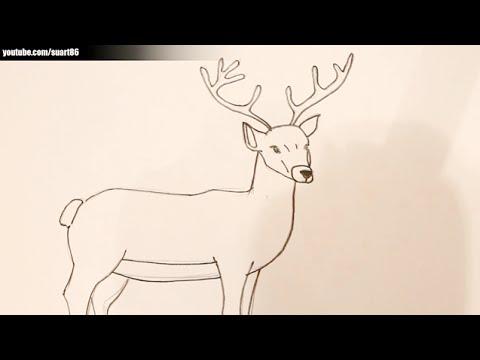 Como Dibujar Un Ciervo Youtube