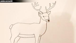 Como dibujar un ciervo