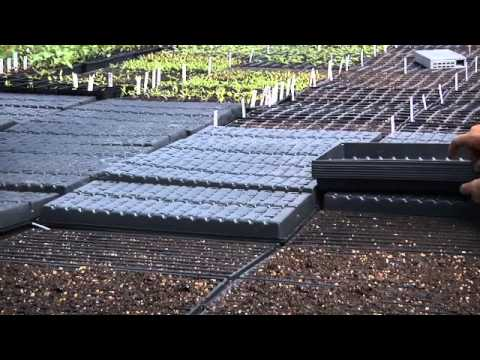 Westhaven Farm Growing Microgreens Youtube