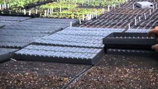 Westhaven Farm - Growing Microgreens