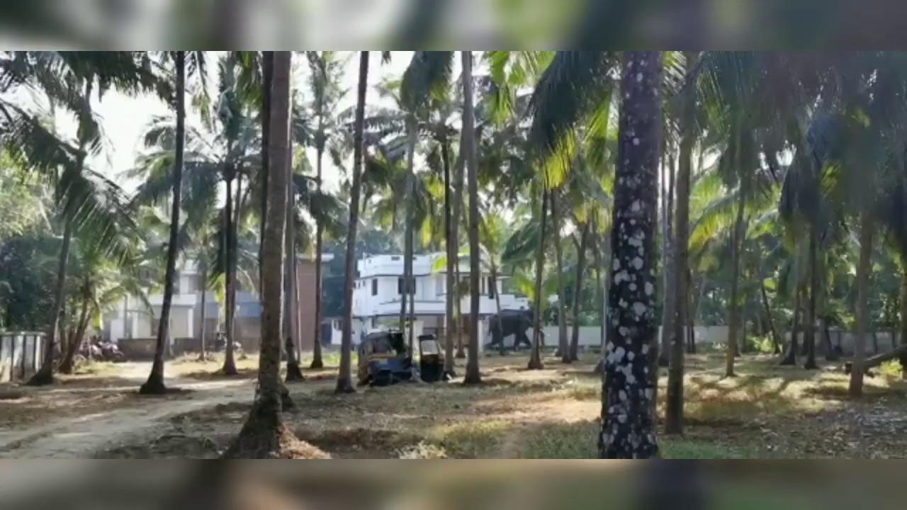 Kerala elephant attack 2020 - YouTube  Kerala Elephant Attack Youtube