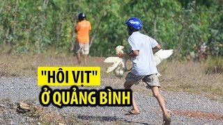 Thực hư chuyện HÔI CỦA HÀNG TRĂM CON VỊT sau vụ lật xe ở Quảng Bình