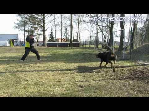 ODO DAREL - Rottweiler Swabia