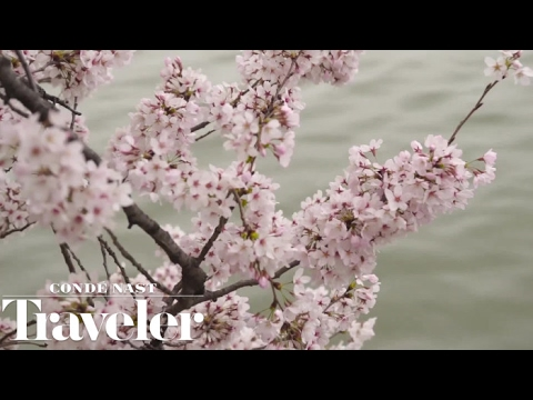 Viewing Cherry Blossoms in Washington, D.C. | Condé Nast Traveler