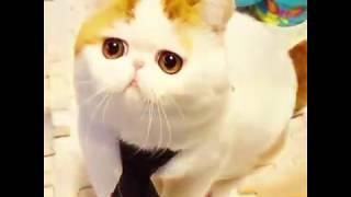 Sosyal medya sayesinde ünlü olan kediler.mp3