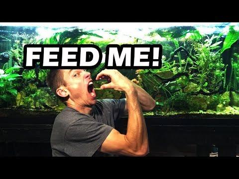 How Much To Feed Your Aquarium Fish? Feeding My Fishtanks
