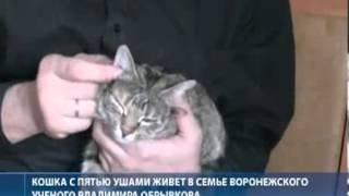 Кошка с 6 ю ушами Сняли.Рф