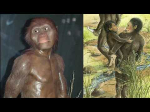 Lucy (Australopithecus) Reviewed in 9 Minutes (Public School Version 2)