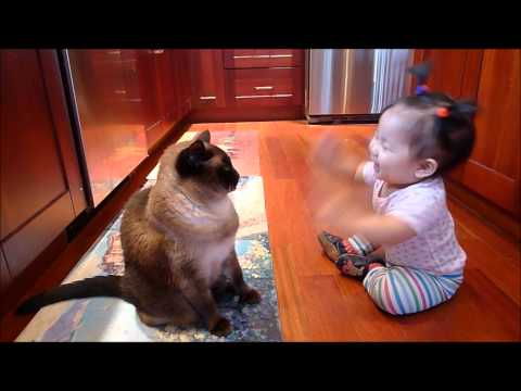 baby talk to siamese cat