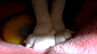 猫飼い主の膝で見せるふみふみ 寧々に癒やされる