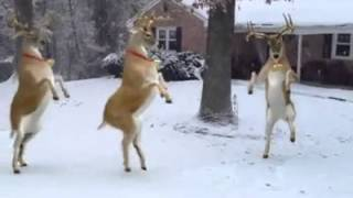 Piosenki świąteczne [2] renifery tańczą?!