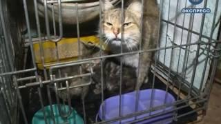 В Пензе откроют еще один приют для бездомных животных