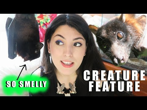 GIANT Fruit Bat | CUTE CHEWING SOUNDS | Indian Fruit Bat | Creature Feature