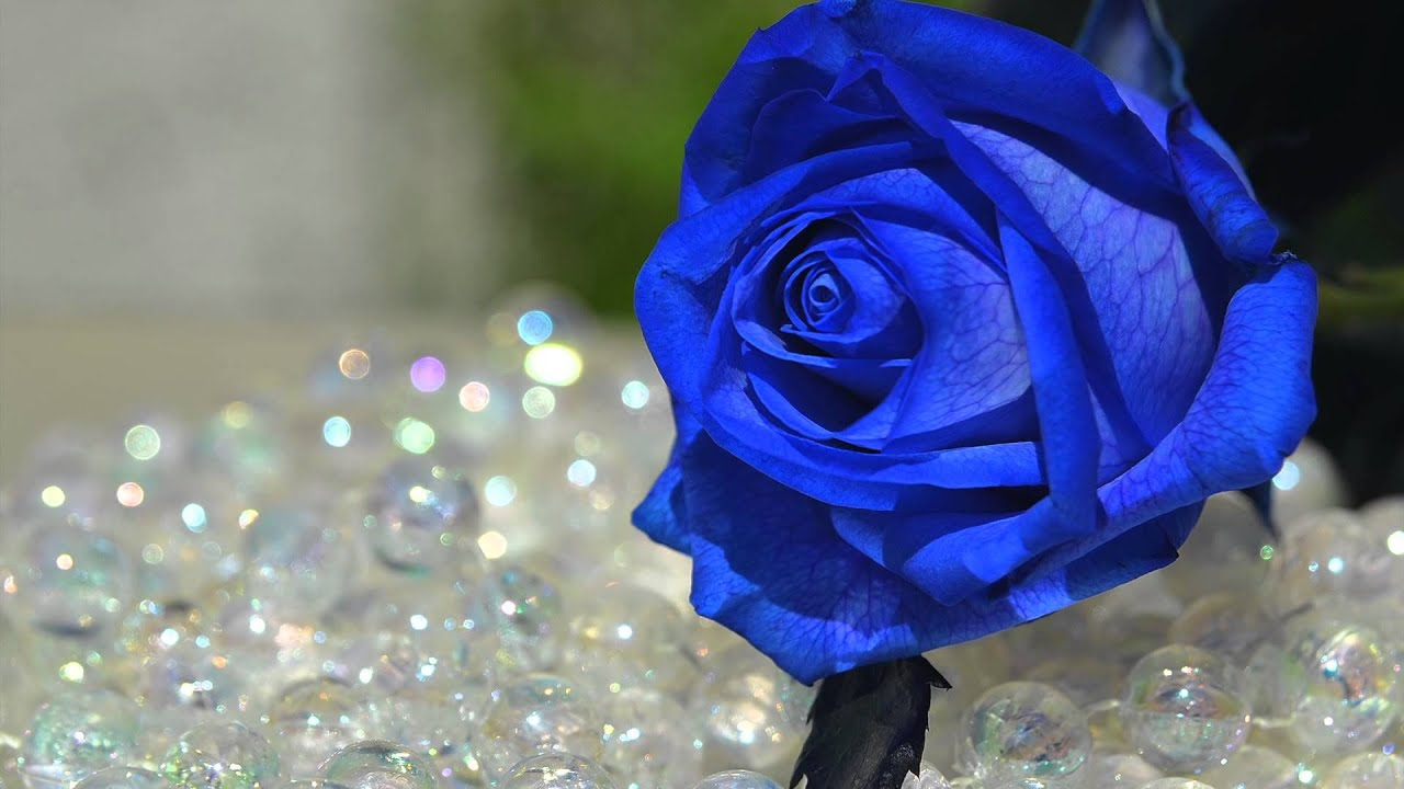 Diaporama Karine Vallier photographe fleurs - YouTube