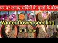 Winter flower seedling , How to grow winter flower from seeds, सर्दियों के फूल  बीज से कैसे लगाएं