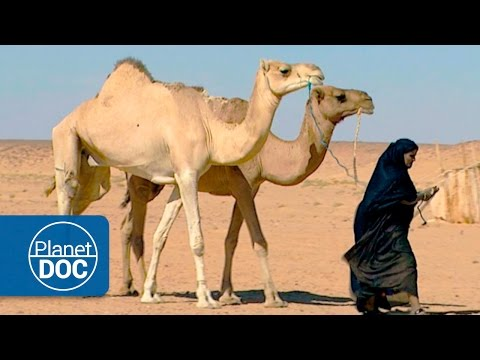 The Greatest Desert | Nomads of the Sahara