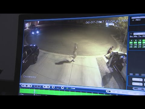 Theives behind crime-spree in Laveen