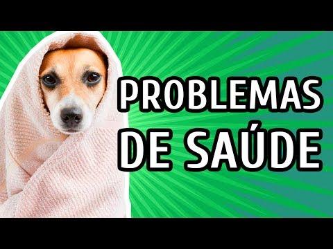 PROBLEMAS DE SAÚDE MAIS COMUNS EM CÃES