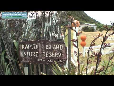 Kapiti Island Nature Tours Birdwatch