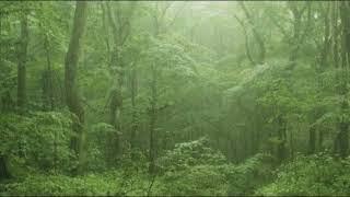 下雨聲 - 森林里的下雨聲,大自然的聲音,療愈,放鬆 Rain Sounds - Rain in the Forest, Nature's Sound, Healing, Relaxing