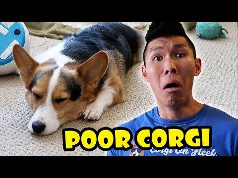 CORGI AWFUL MISTAKE I MADE - I'm SORRY! || Life After College: Ep. 562