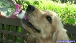 Cocker Spaniel Visits Singapore Botanical Gardens