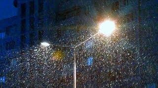 Футаж Снегопад в Городе. Красивый Снегопад в Свете Фонарей. Видео Красивый Снегопад в Городе Ночью