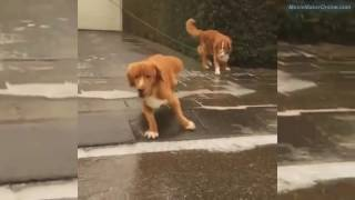 The most unlucky dogs in the world - Dogs Fails - LOL!!!