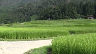 2011 Japan Trip Part 3: Ogimachi Village