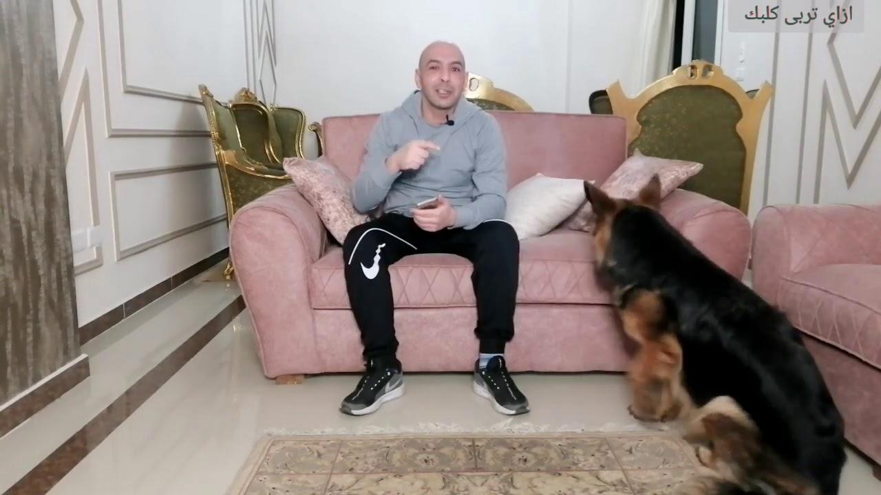 خلي بالك و انت بتستلم كلبك بعد التدريب /النتاية ممكن تحمل من كام دكر/ليه مش بنجوز النتاية بدري
