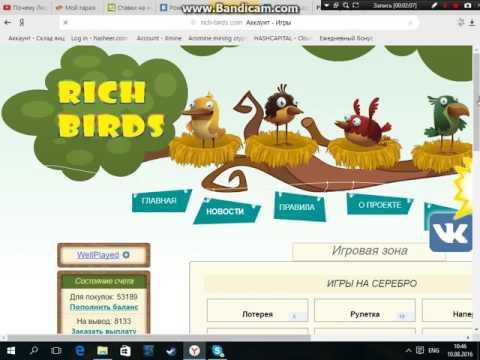 Видео Птицы заработок в интернете
