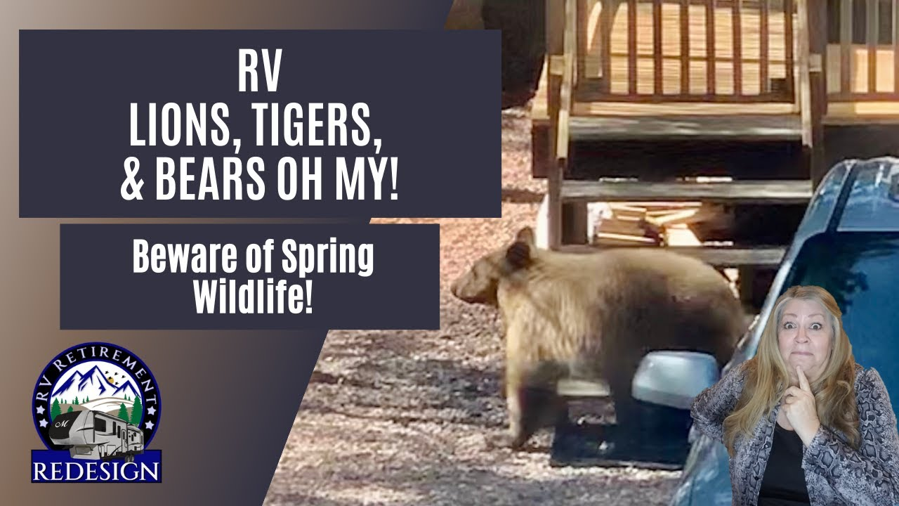 RV Lions, Tigers, and Bears OH MY! Beware of Spring Wildlife