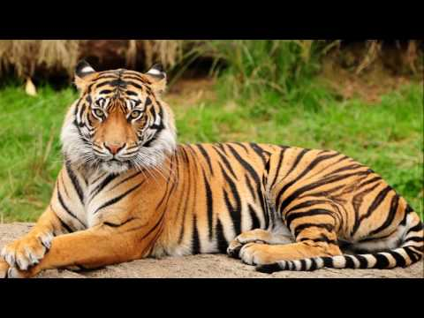Bilaspur Travel Guide & Tours | BreathtakingIndia.com