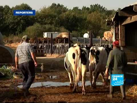 Life turns sour for French dairy farmers