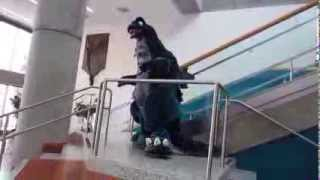 Big Wow ComicFest 2014: Godzilla Ascending the Staircase