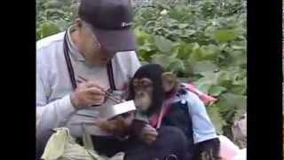 Sevimli Köpek ve Akıllı Maymun Bölüm1