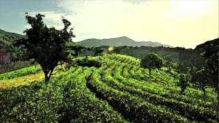 Alan Watts - The story of a Chinese farmer