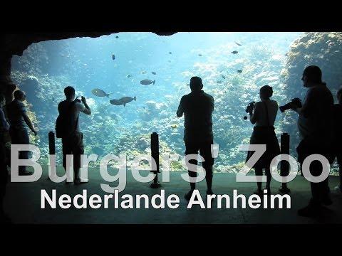 Burgers Zoo // Bush and Ozean // Nederlanden // Arnheim