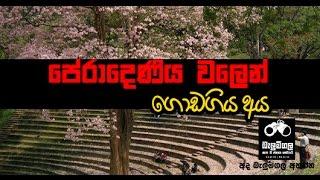 Balumgala - පේරාදෙණිය වලෙන් ගොඩ ගිය අය - 13th October 2016