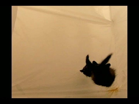 Cat in zero gravity